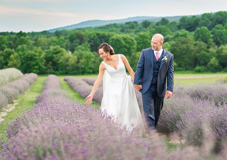 Lavender fields at Springfield Manor Winery and Distillery