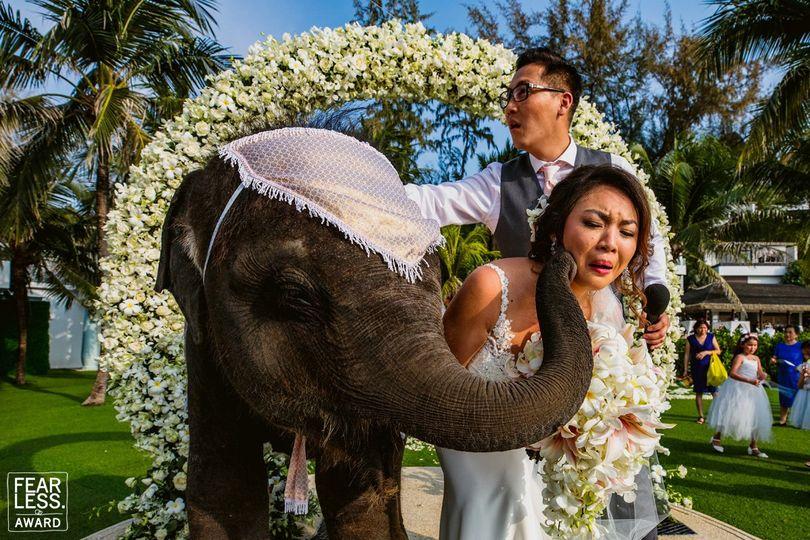 Elephant kisses bride
