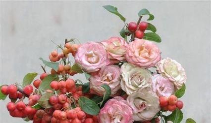 La Rosa Canina