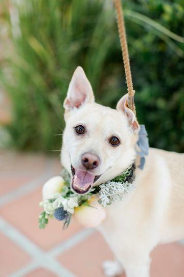 Brilliant Wedding Co. - Dog