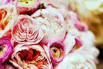 Vibrant Flowers image