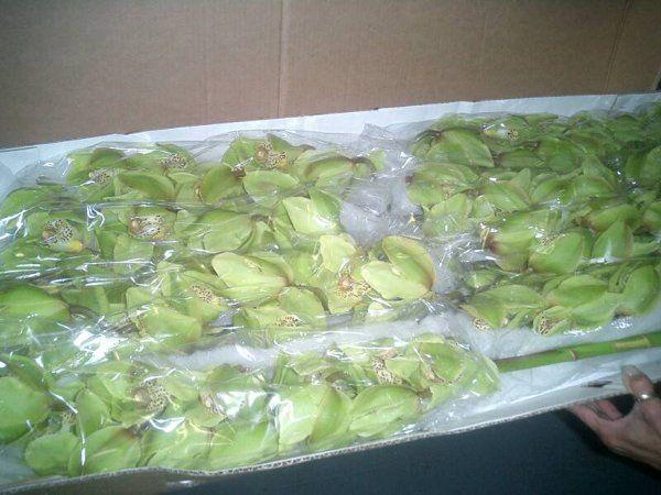 GreenOrchidswww perlafarms com