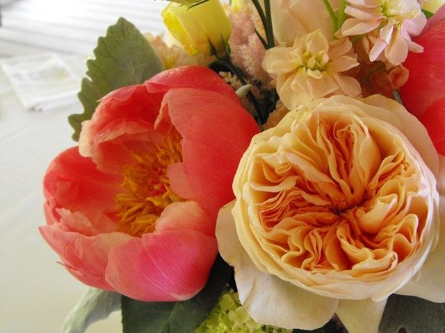 Tmx 1374886687884 Close Up Juliette Rose And Coral Charm Peony Kingston, New York wedding florist