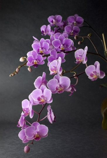 Potted orchids can be a great wedding flower.  They are our specialty!  We have all kinds of...