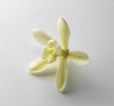 VanillaplanifoliaVanillaCarolSharp86480
