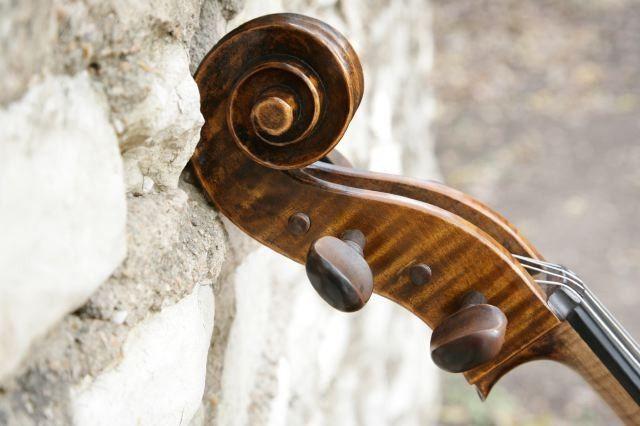 The head of the cello