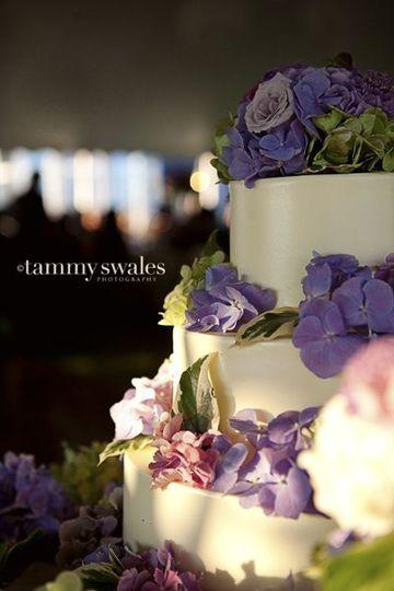 TammySwalesPhotographyWisteria201012