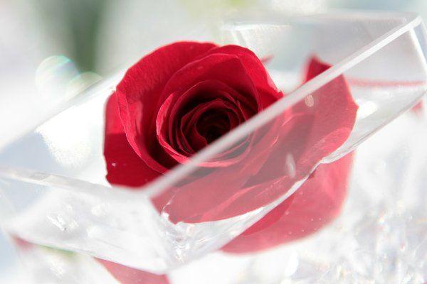 Tmx 1333400647485 IMG4175 Long Island City wedding florist