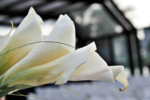 Tmx 1333400661424 IMG4445 Long Island City wedding florist