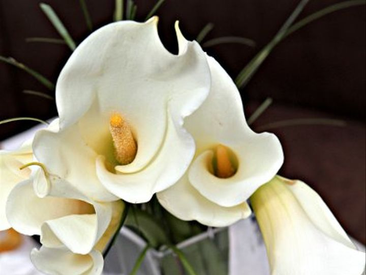 Tmx 1333400686040 IMG5048 Long Island City wedding florist