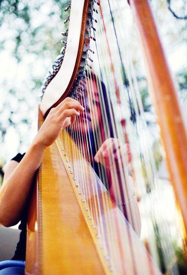 harp reception vivid