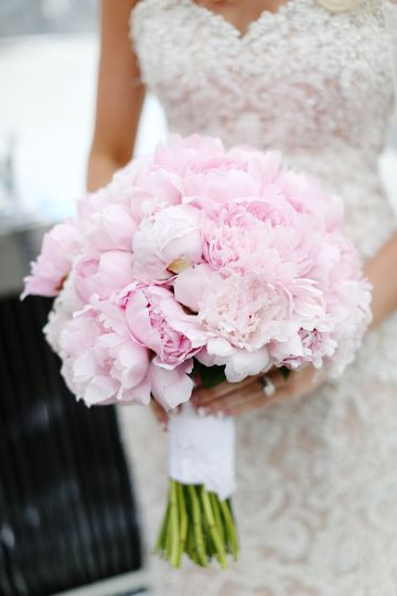 Blush pink roses