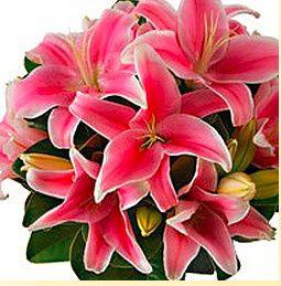 Tmx 1434725620751 Westsideflowers3 Tulsa wedding florist