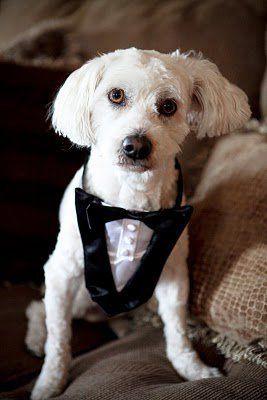 Tmx 1281670340385 Willie Langhorne wedding planner