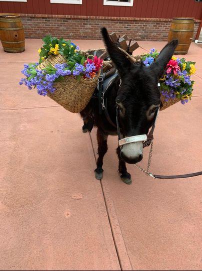 Spruce Mountain Ranch Donkey