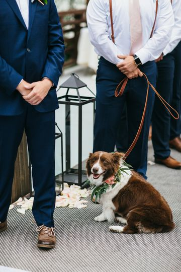 Puppy in wedding