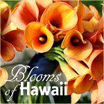 bloomsofhawaiitile4