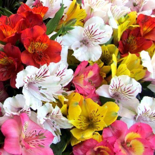 Tmx 1399390552994 Alstromeriaassortedcolor Chelsea, MA wedding florist
