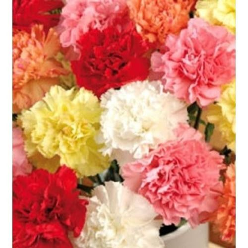 Tmx 1399390554448 Assortedfancycarnation Chelsea, MA wedding florist