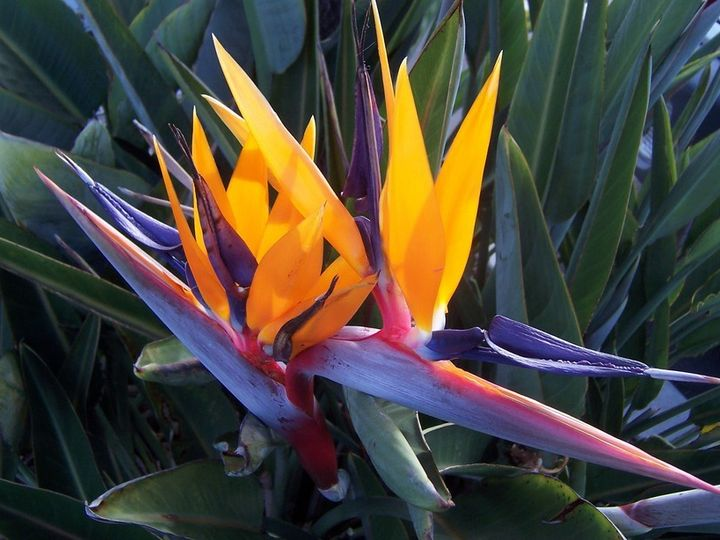 Tmx 1399390562318 Birds Of Paradise Flowe Chelsea, MA wedding florist