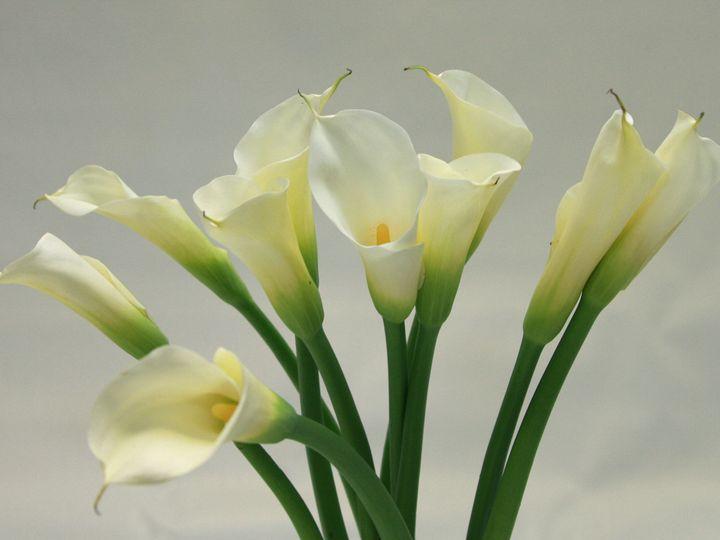 Tmx 1399390565371 Calla Lil Chelsea, MA wedding florist