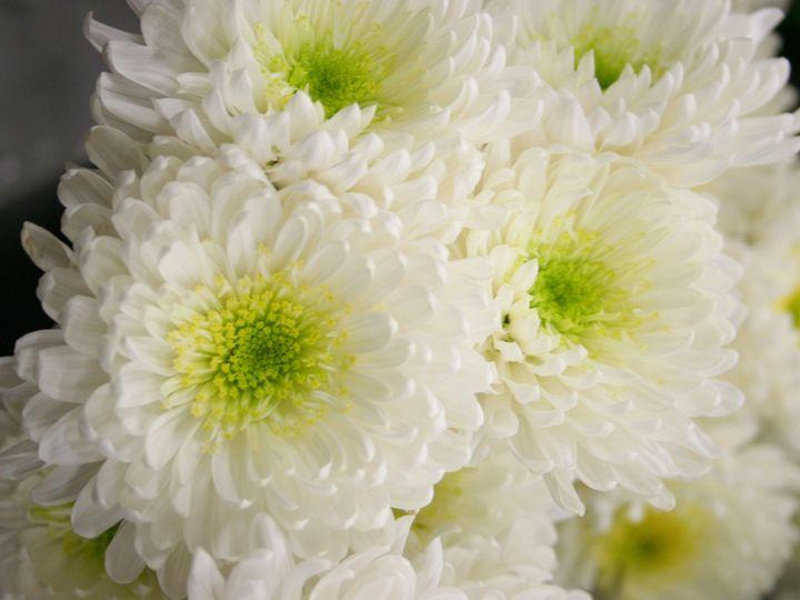 Tmx 1429886021948 Img3324 Chelsea, MA wedding florist