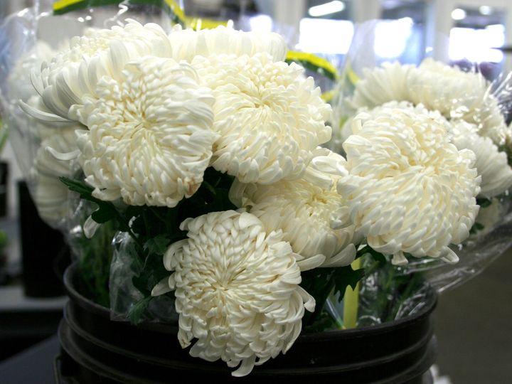 Tmx 1429887293342 Img2887 Chelsea, MA wedding florist