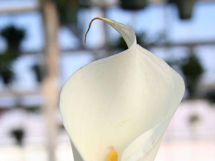 Tmx 1429887319411 Img3263 Chelsea, MA wedding florist