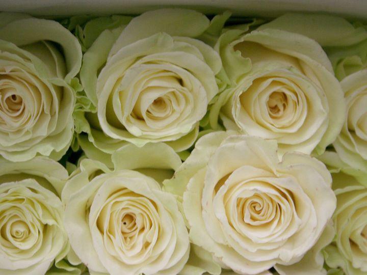 Tmx 1429887393247 Img3329 Chelsea, MA wedding florist