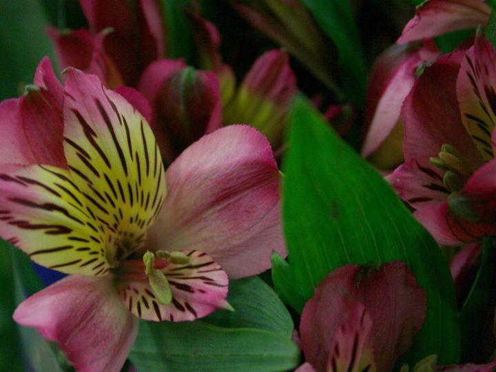 Tmx 1429887505387 Img3333 Chelsea, MA wedding florist