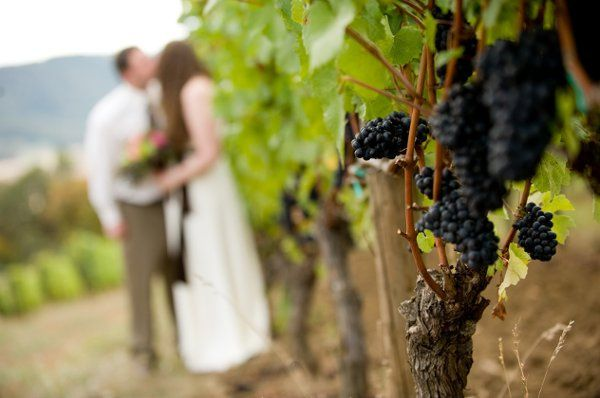Couple's photo in the vineyard