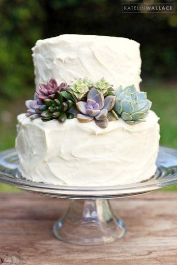 Rustic Cream Cheese Cake with Succulents
