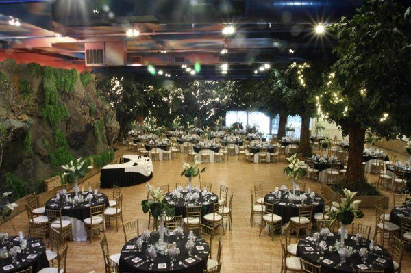 Enchanted Forest Room