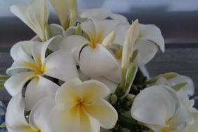 Plumeria Weddings Hawaii