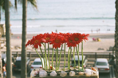 Sand and sea shells for this beach wedding.