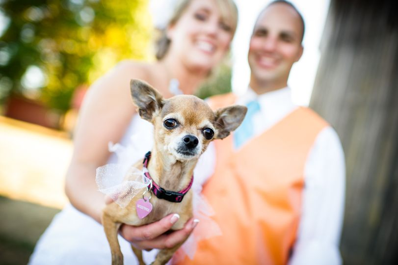 Photo by Powers Photography Studios  The real maid of honor!   Oregon Rustic Country Orchard...