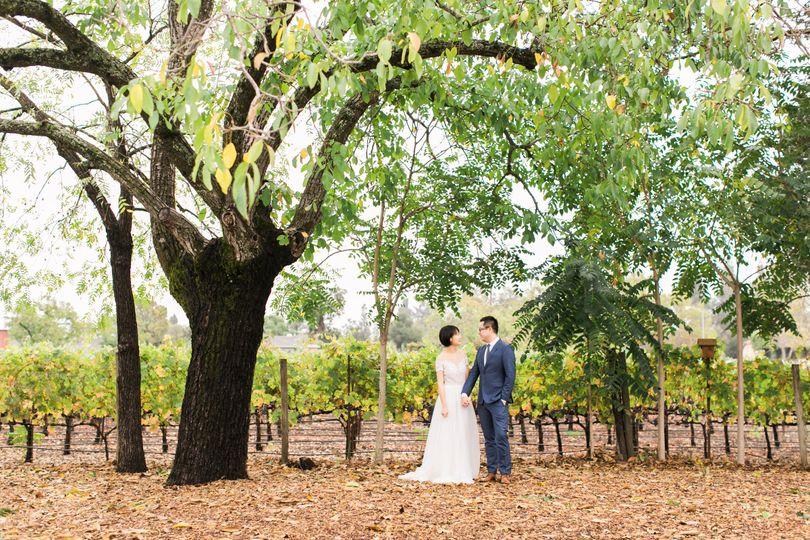 Couple's portrait under walnut tree on vines