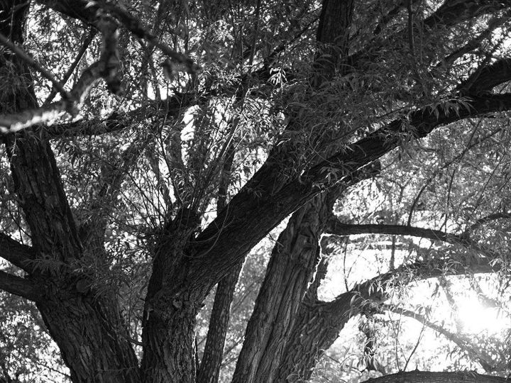 Tmx 1487021385898 Running Creek Manor Oak Tree Bw Elizabeth, CO wedding venue