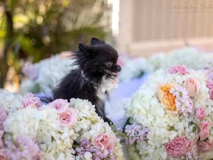 Tmx 1513139627218 Tinkerbelle Lahaina, HI wedding planner