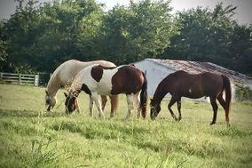 White Rose Ranch Retreat