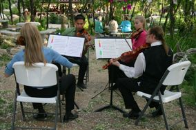 Chamber Orchestra of the Springs Ensembles