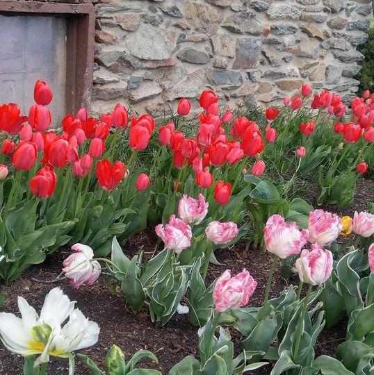 Westhills floral