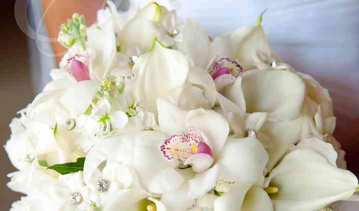 Fiddlehead Floral