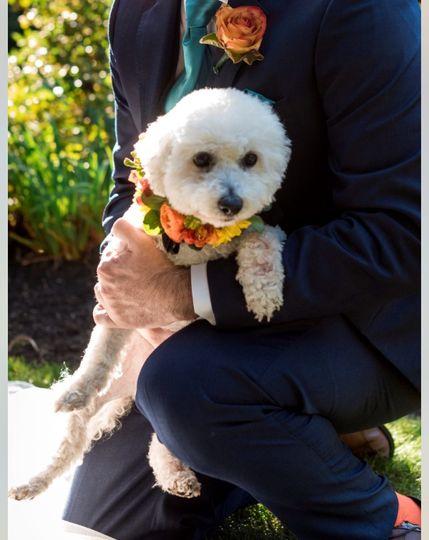 Custom Floral Dog Collar