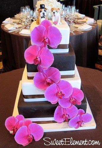 Tmx 1332532691389 Brownwhitesquareweddingcakewithfuschiamothorchids East Orange wedding cake