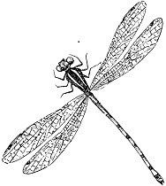 antique dragonfly image graphicsfairy