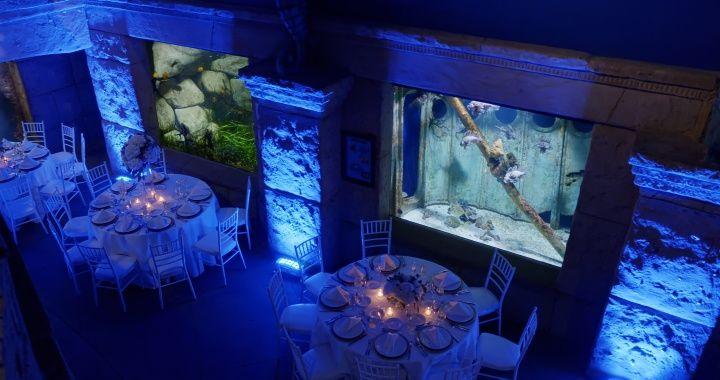 Within Aquarium