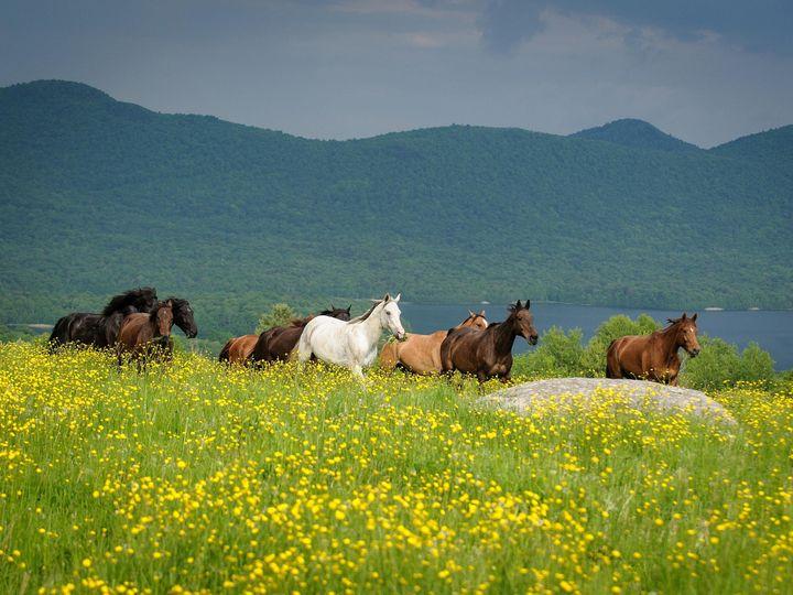 Tmx 1424791453538 Horses In Meadow Low Chittenden, Vermont wedding venue