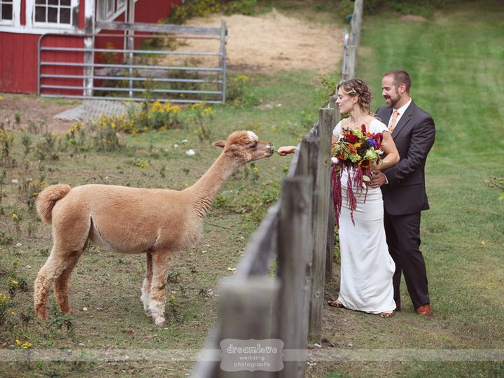 Tmx 1400516641006 Couple  Alpacalore Arlington, VT wedding venue