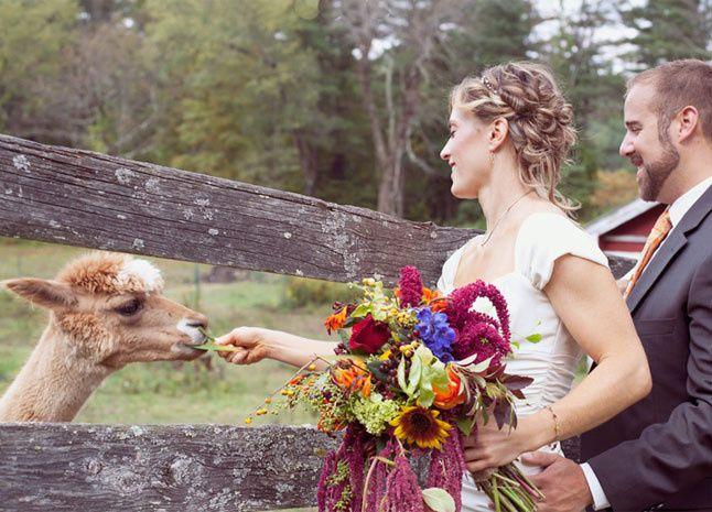Tmx 1473068294842 Bridealpaca Arlington, VT wedding venue